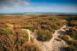 dorset heath2