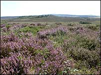 dorset_heath