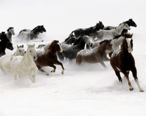 galloping-horse-HD-wallpaper
